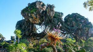 The Land of Pandora